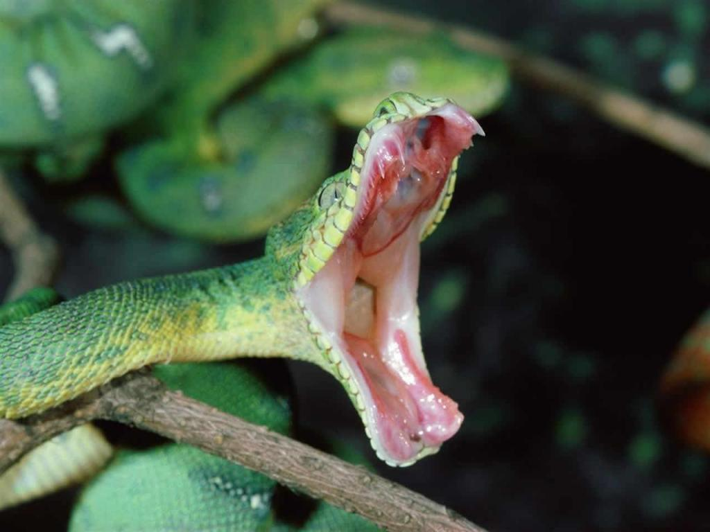 venom snake